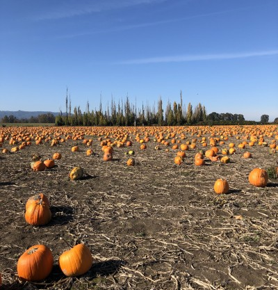 Sauvie Island in Fall