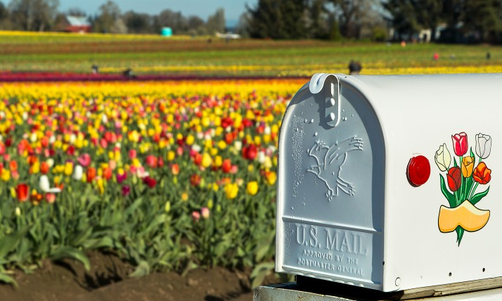 Tulips and Mailbox