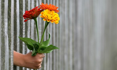 A person gives a bright bouquet of flowers across a fence